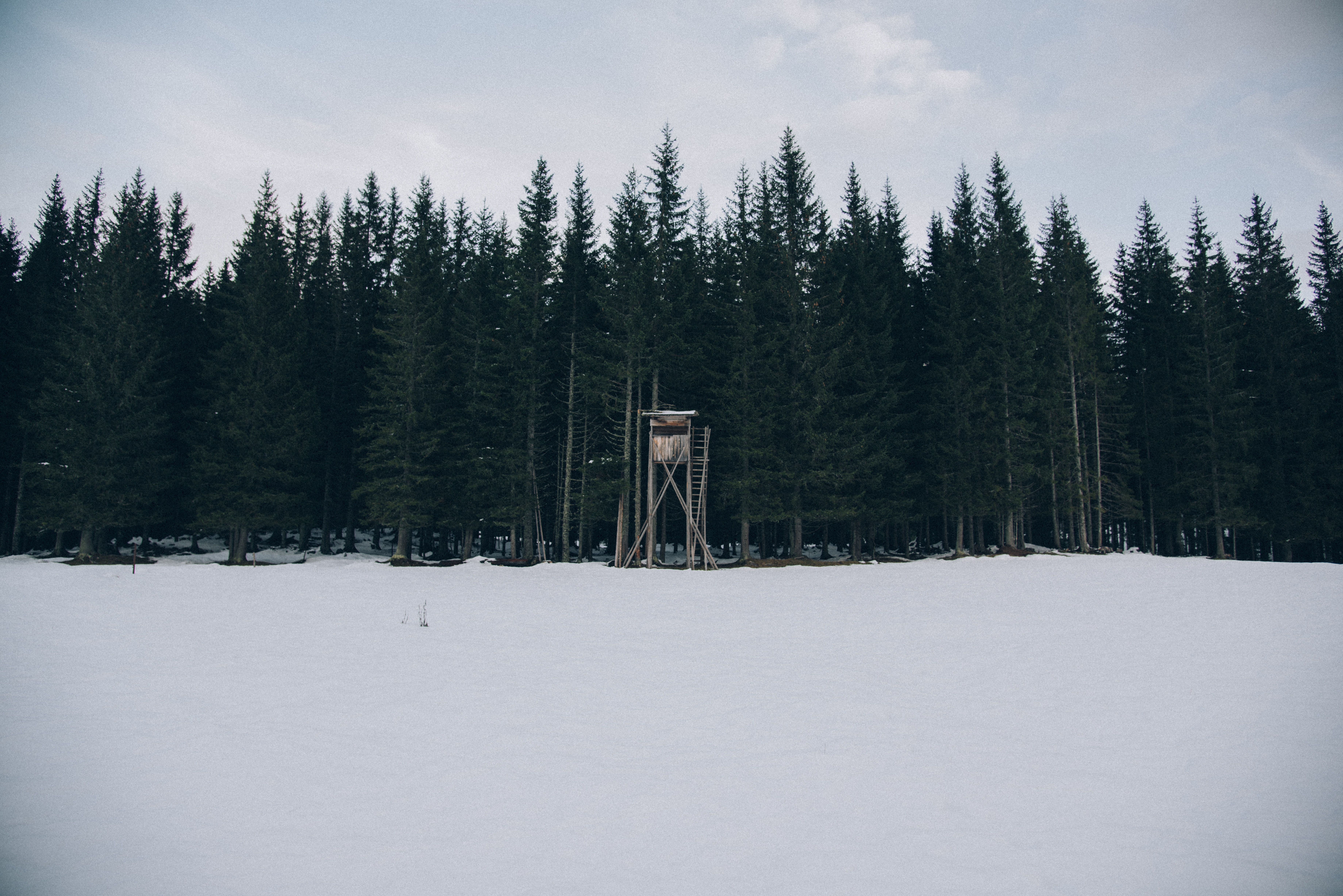 watchtower in front of trees