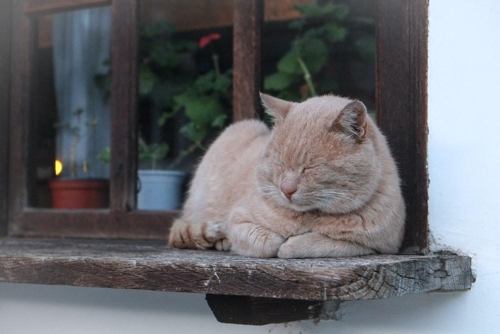 orange cat lying on brown wooden window
