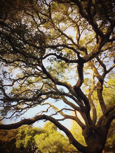 low angle photo of green leaf tree