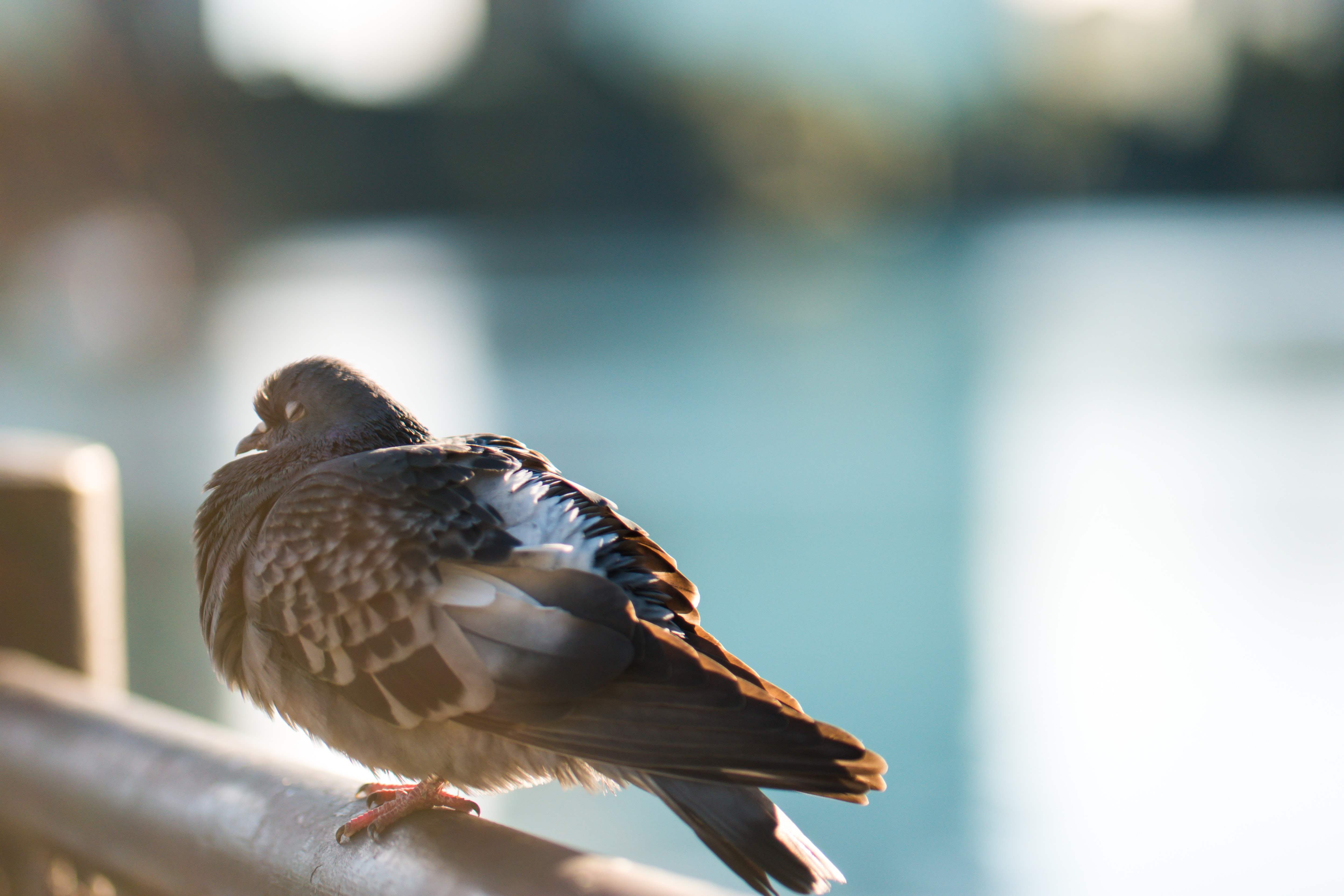 Pigeon resting on a railing on a sunny day