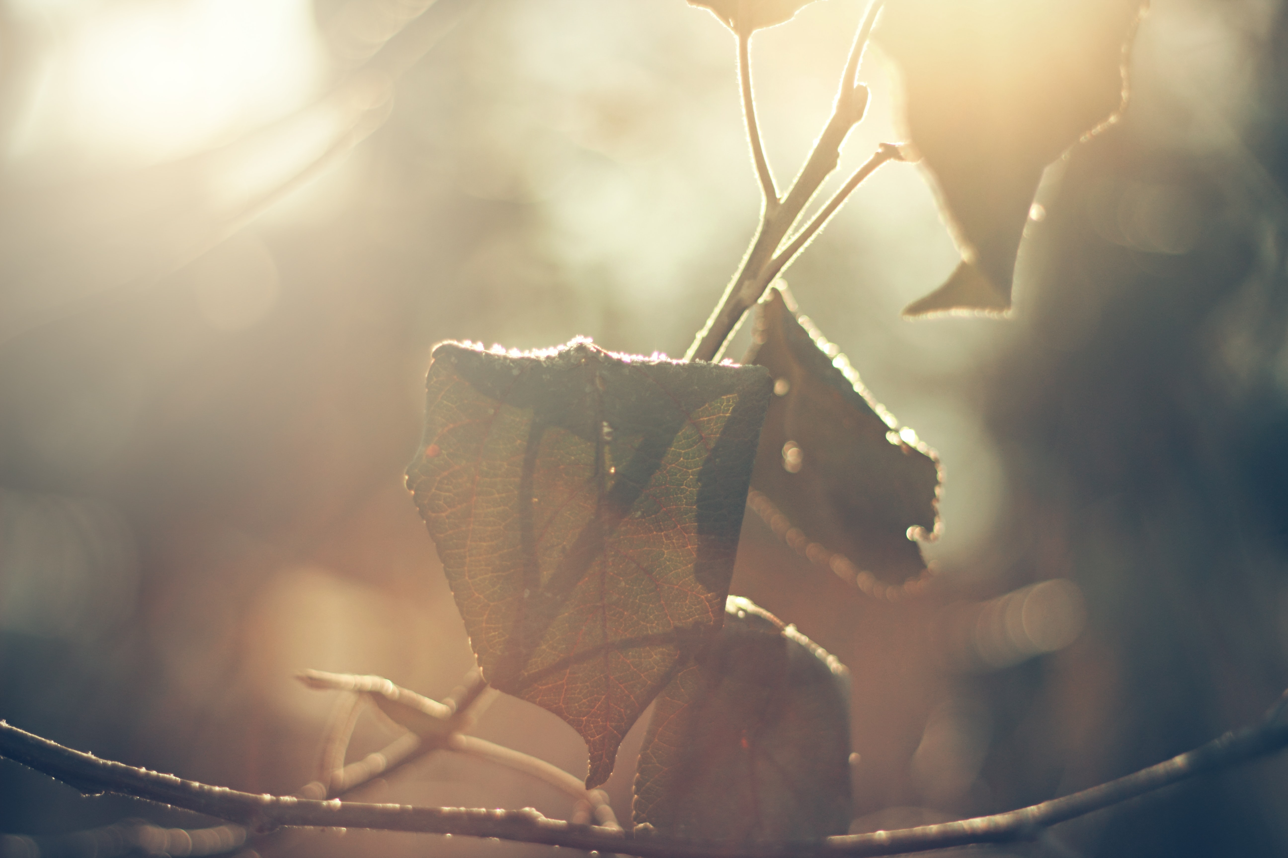 A macro shot of withering leaves in warm light