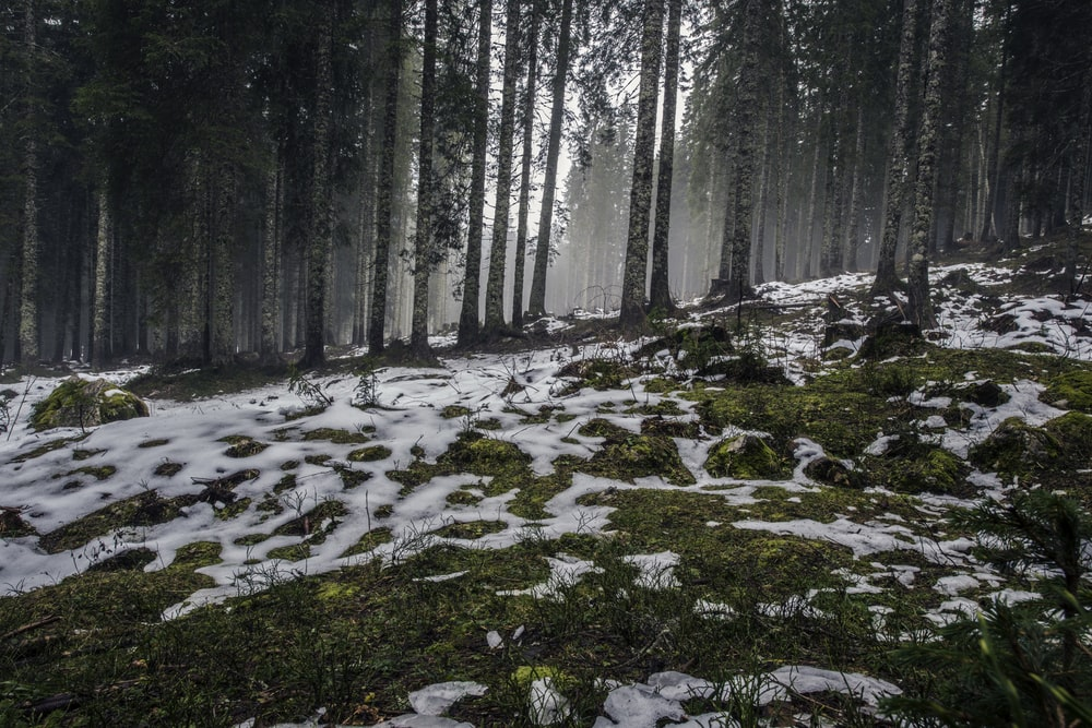 snow coated forest field