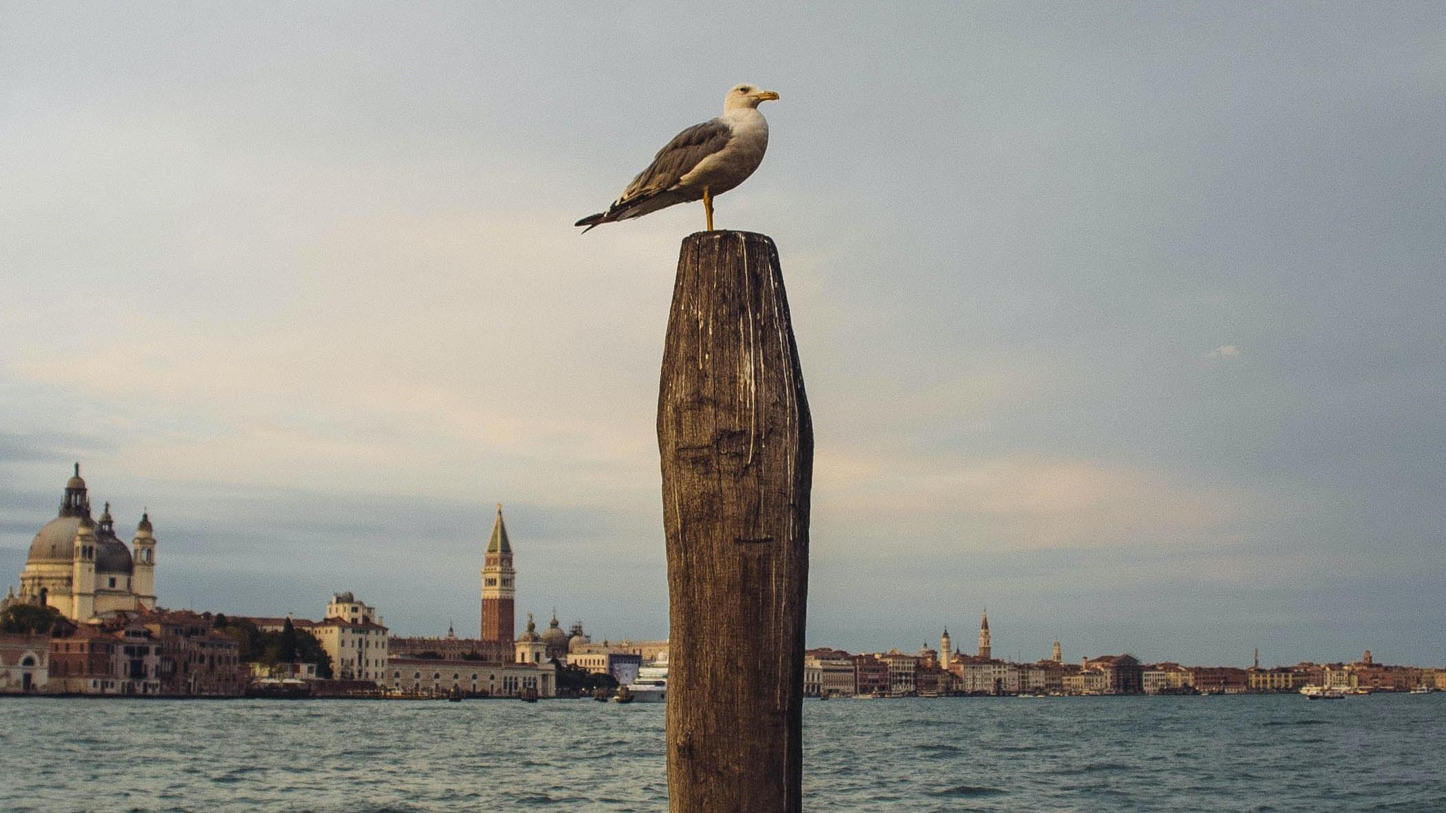bird on brown wooden post