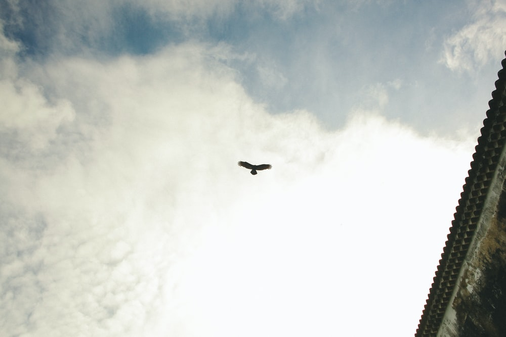 silhouette of bird flying under blue and white sky near gray building
