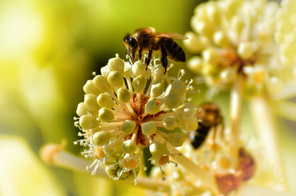 selected-focus photography of yellow and white petaled flower with black and yellow bee