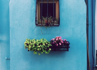 window with frame above green and pink petaled flower on floating shelf