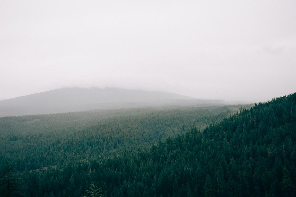 green pine forest near hill