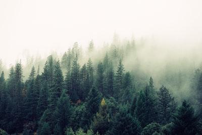Misty shroud over a forest