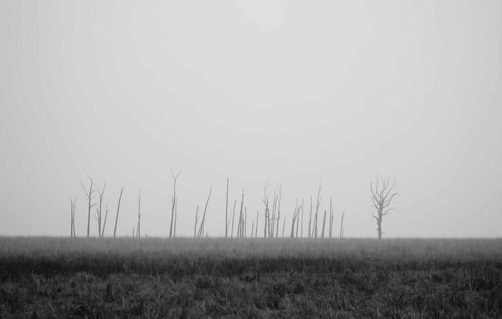gray trees on grassland
