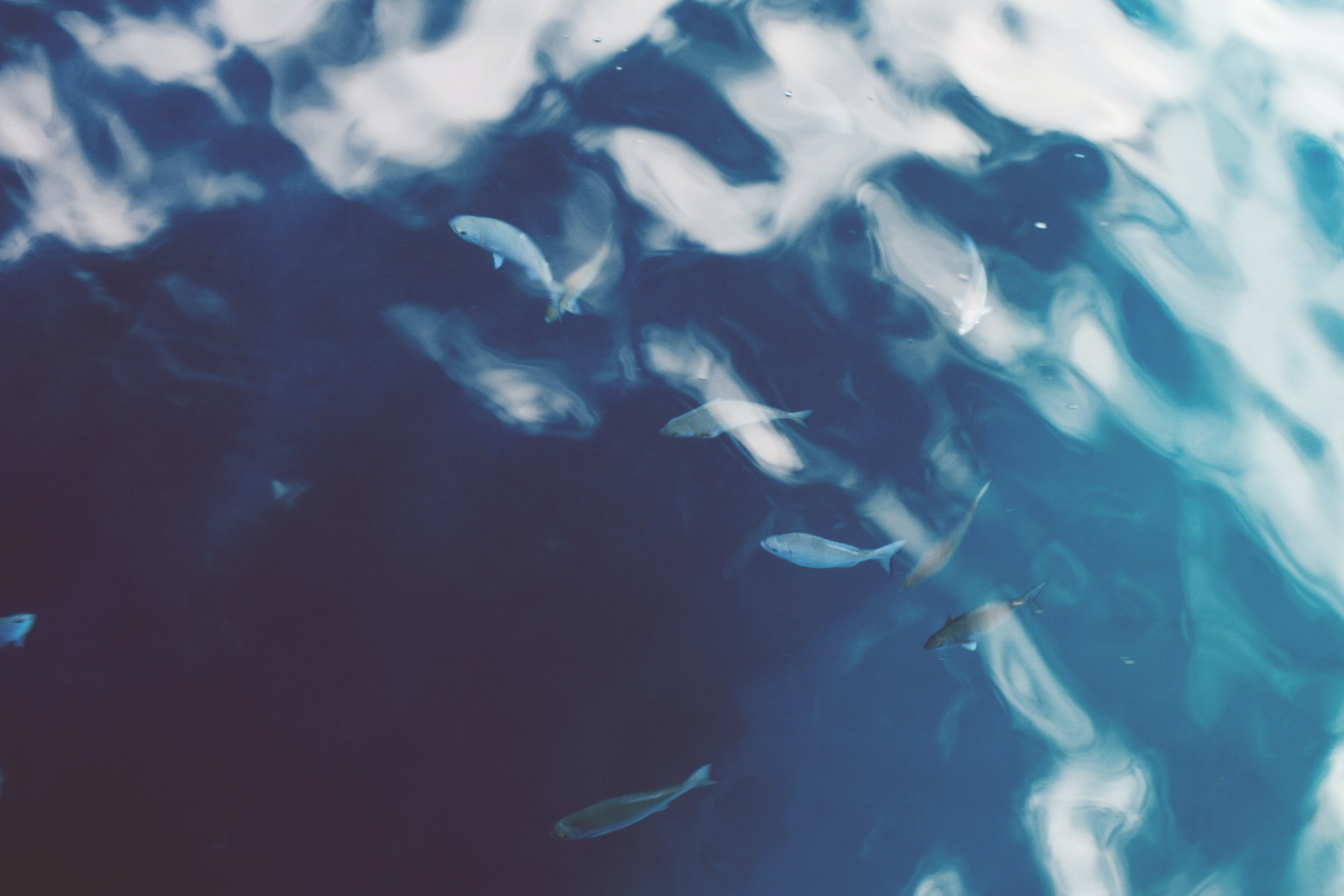 A school of small fish in choppy azure sea water