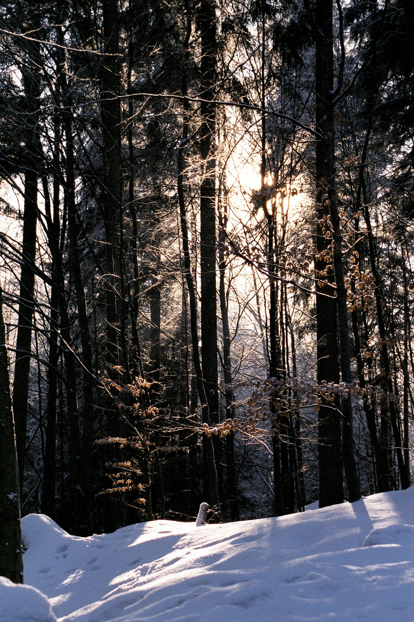 Winter scene with trees covered in snow and sunlight shining through the branches