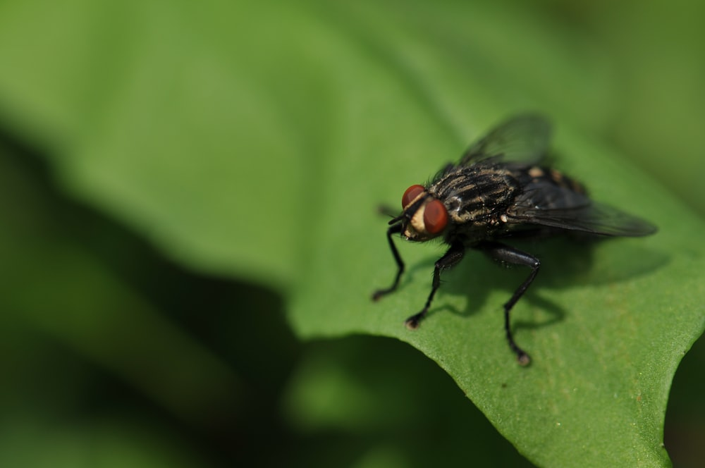 focus photography of black fly