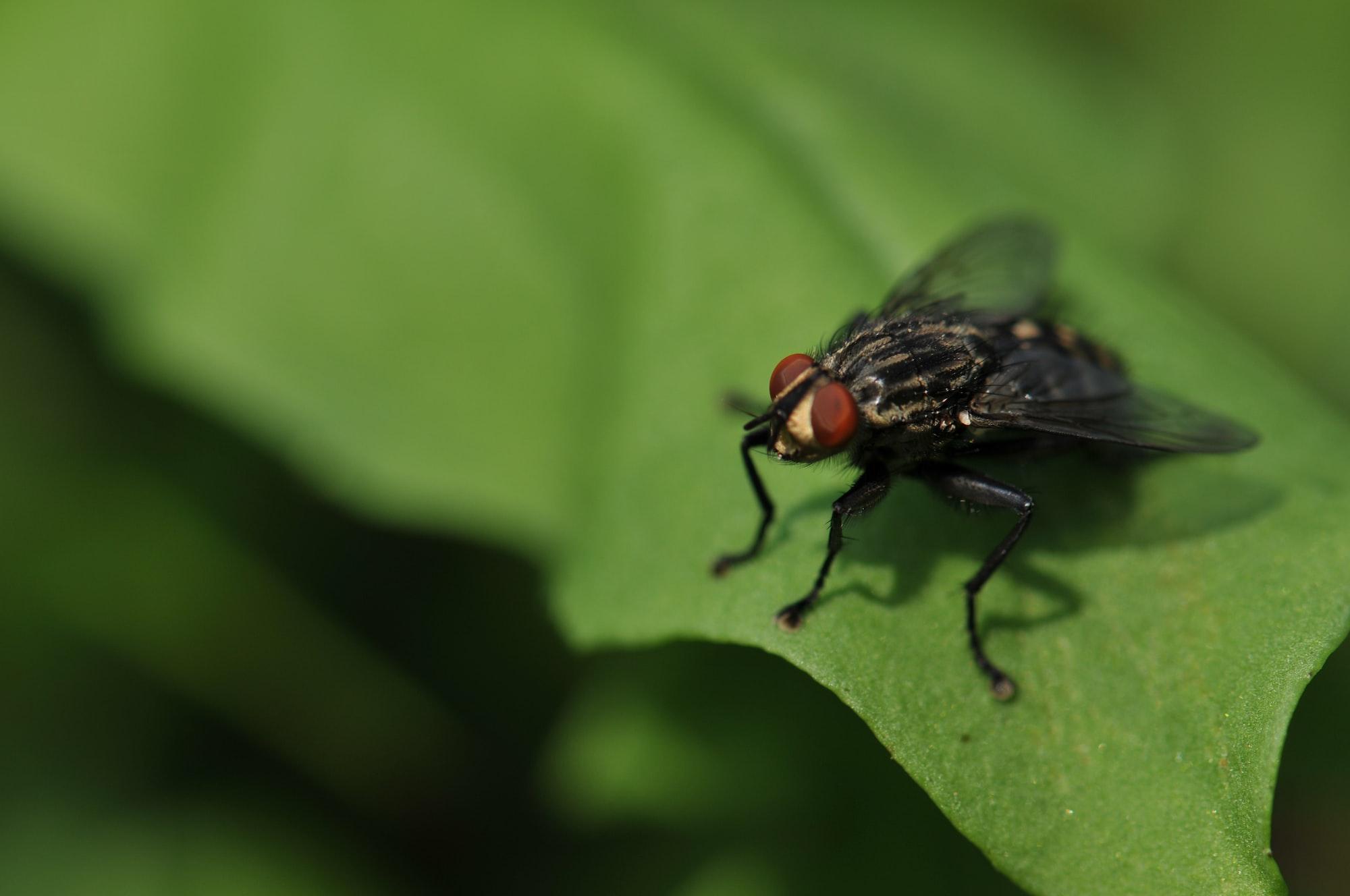 Squashing Bugs