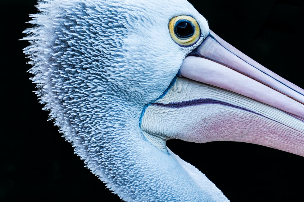 close-up photography of flamingo