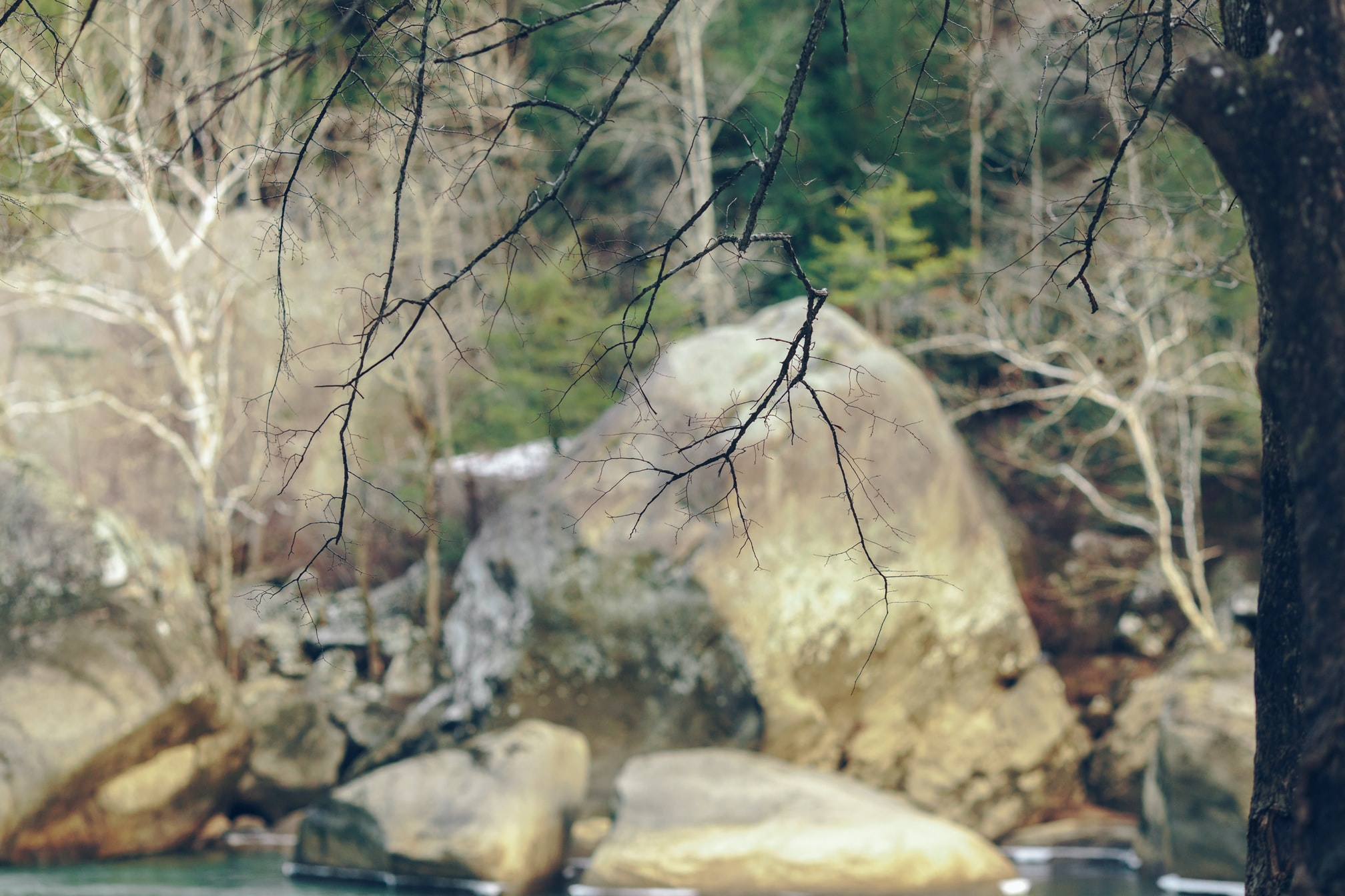 A blurry shot of large rocks at the edge of a forest with bare branches in the foreground