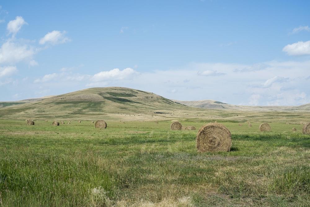 hay stocks on grassland