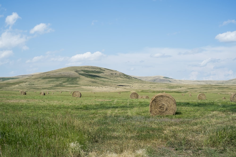 hay stocks on grassland