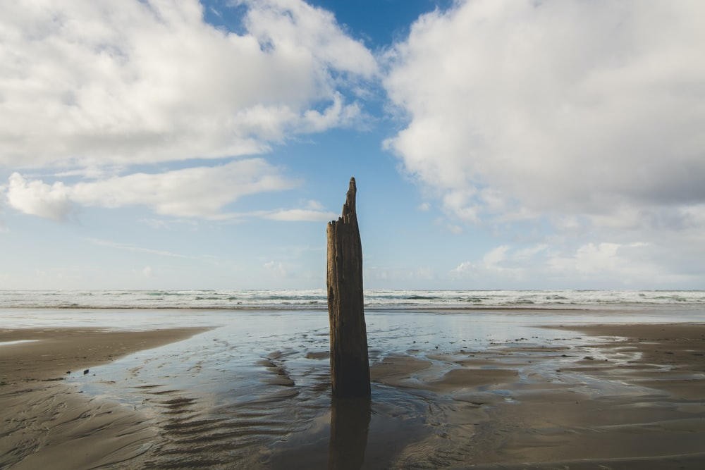 brown tree log standing on gray sand under cloudy sky