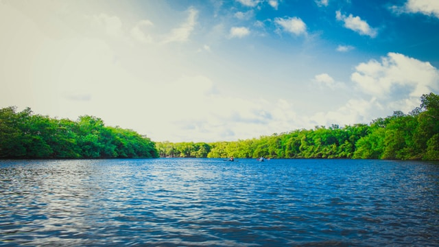 calm body of water near tall trees during daytime