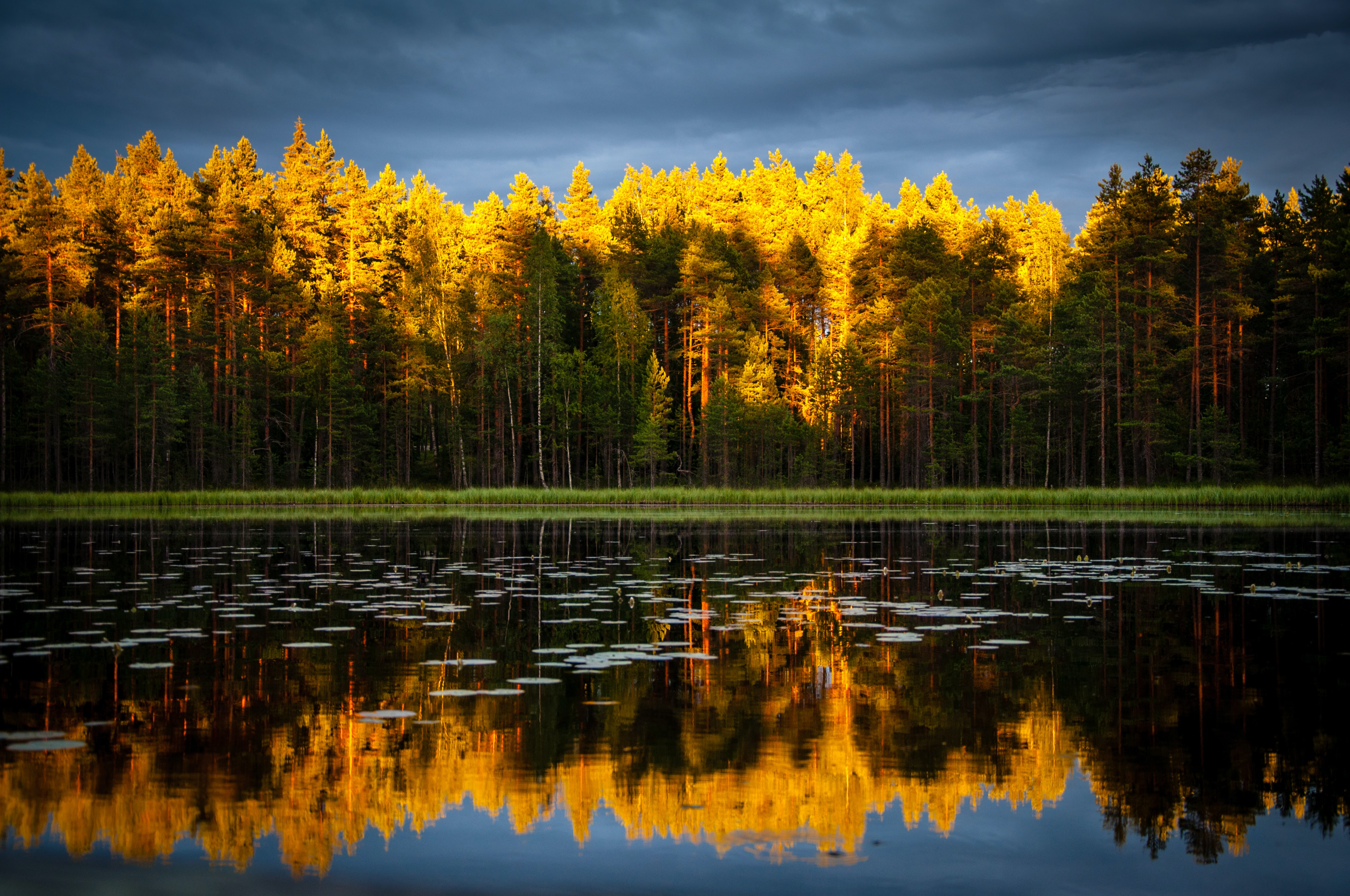 landscape photography yellow and green leafed trees