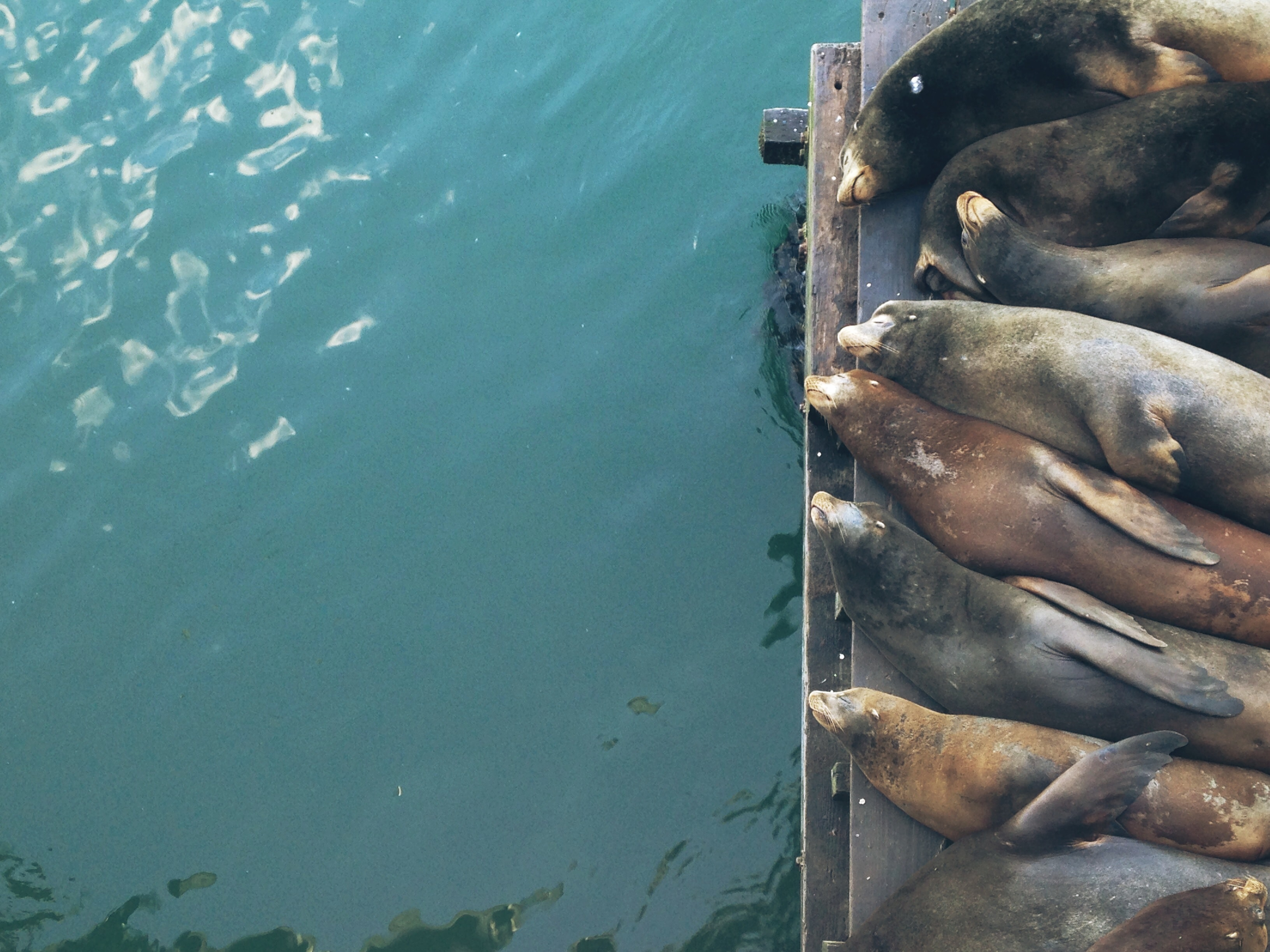 aerial photo of seals on wooden dock during daytime