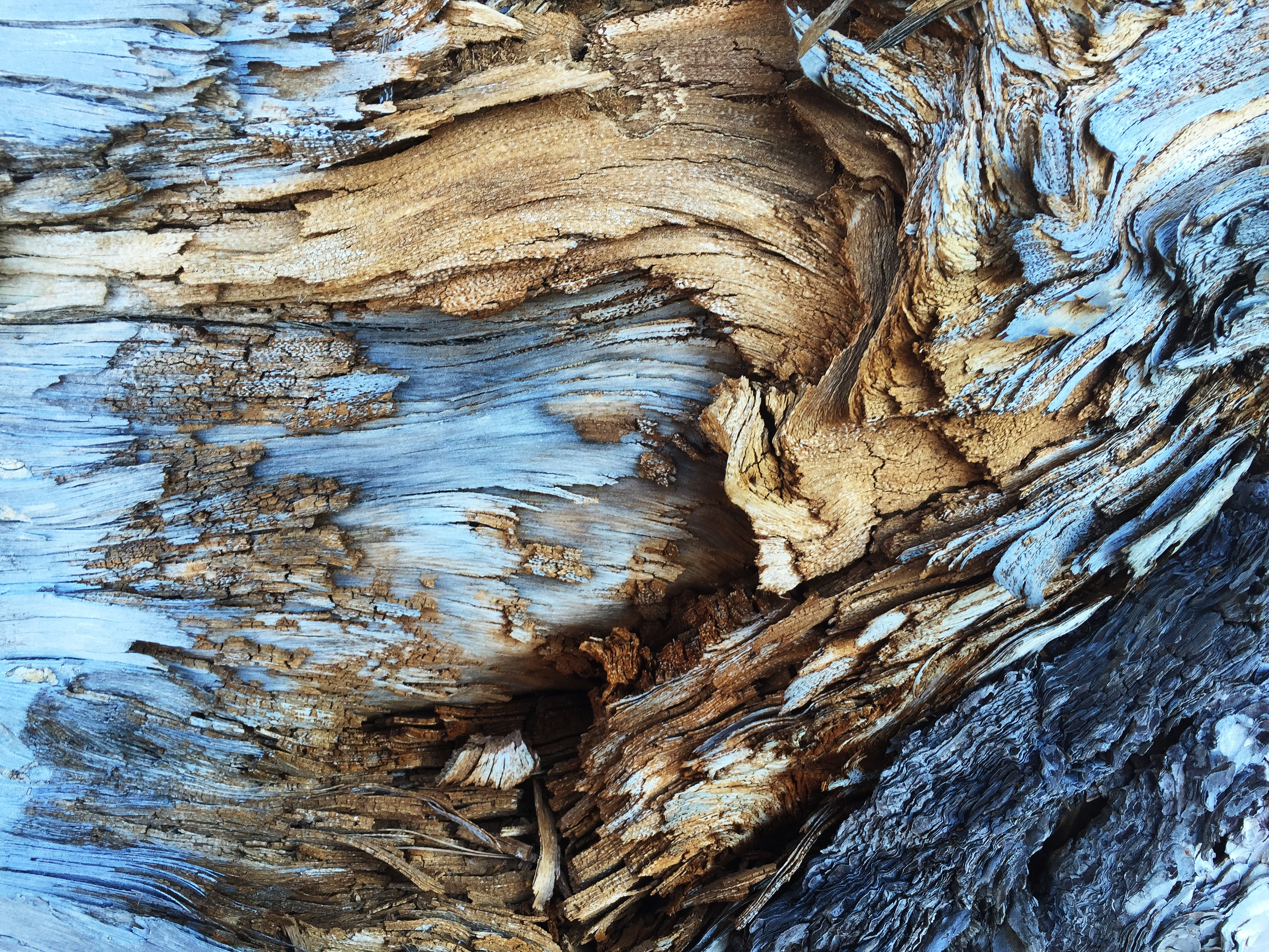 An abstract texture in light brown and blue tree bark