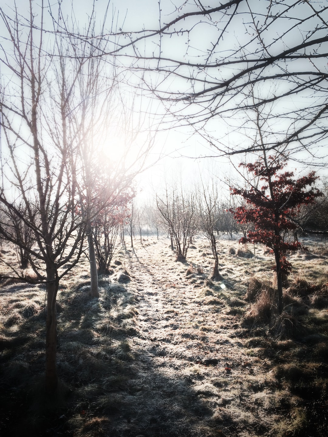 Frozen orchard path