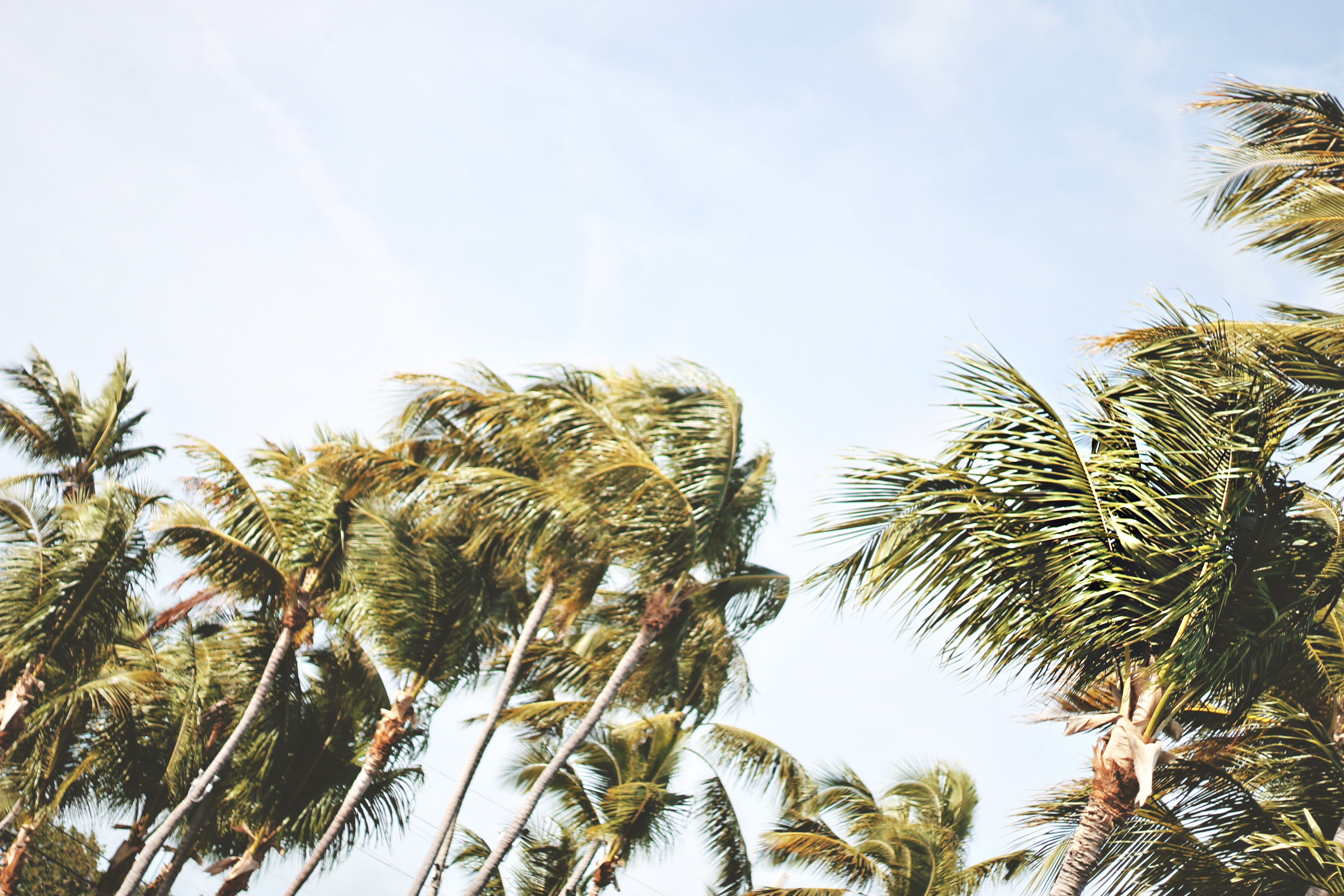 low-angle photography of green coconut trees under white sky during daytime