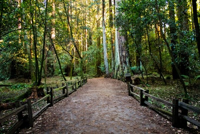 pathway in forest with yellow sunlight outdoor teams background