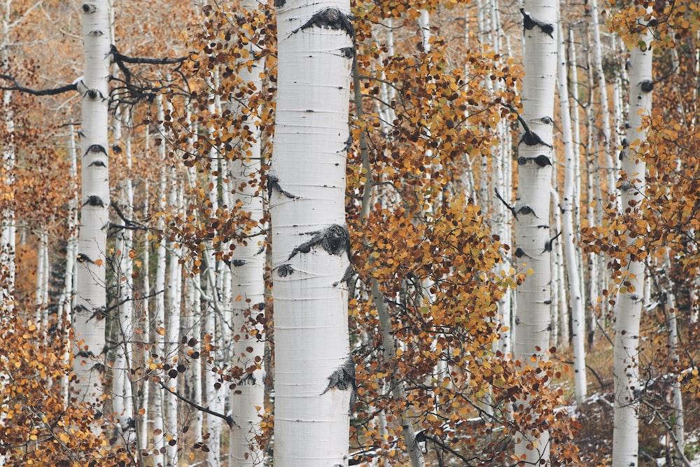 orange leafed trees