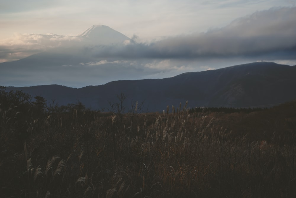 grayscale photography of plants in front of mountain