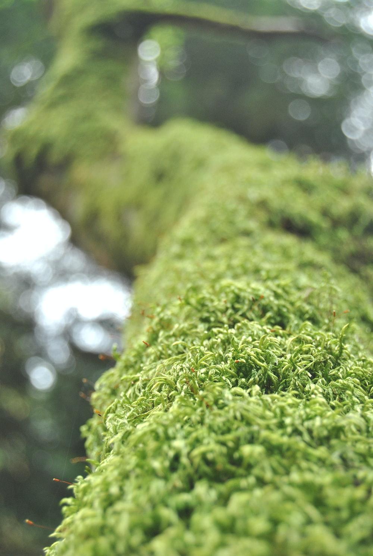 selective focus photo of green grass