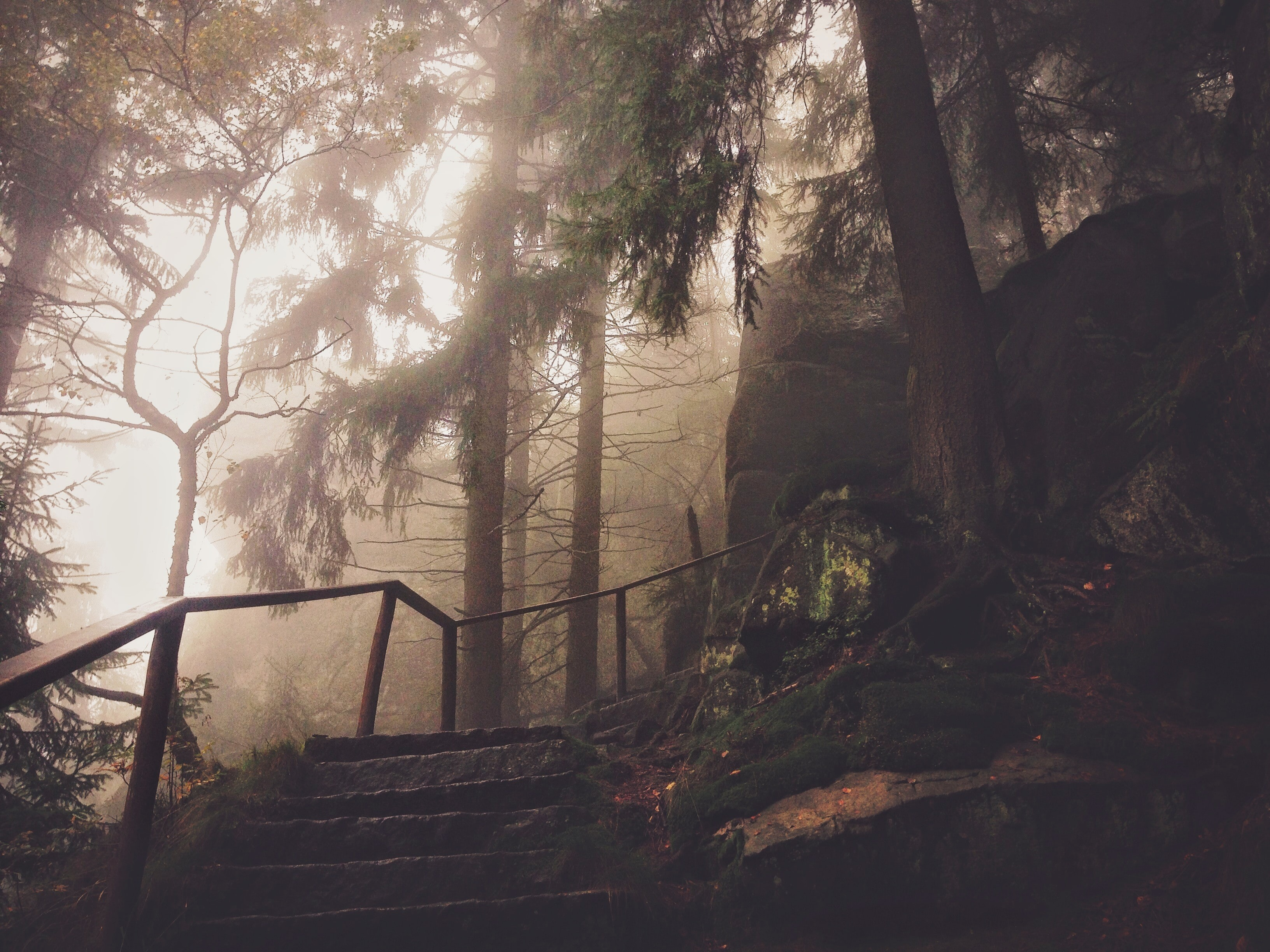 Stone stairs with a railing in a foggy forest