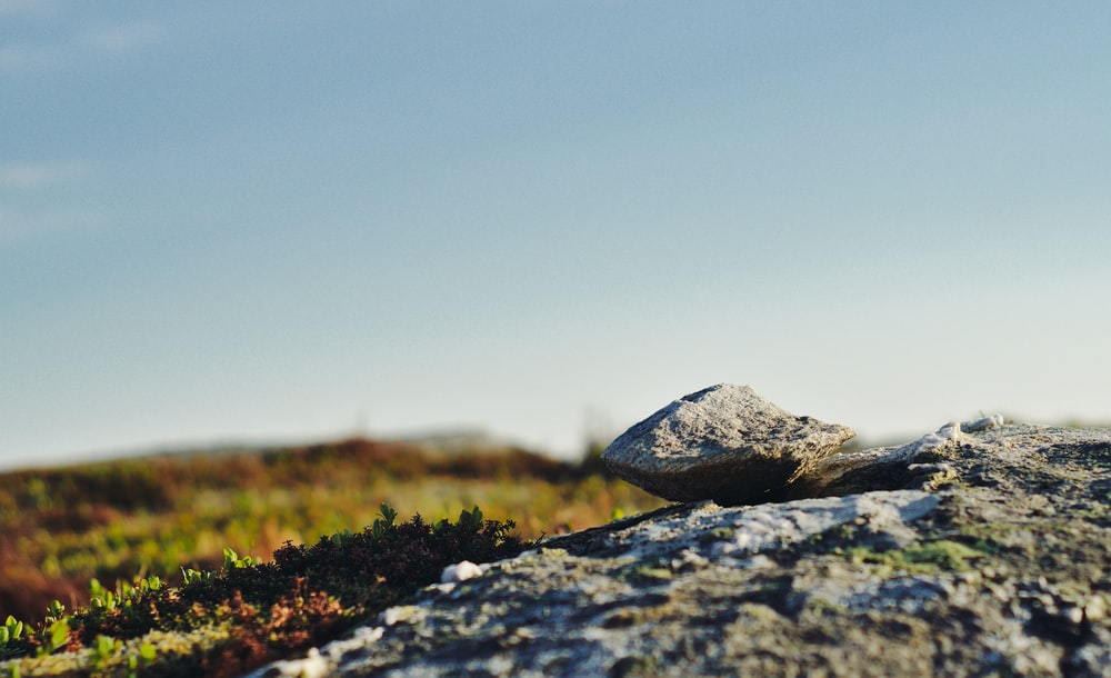 shallow focus photography of stone and grass