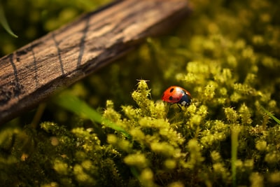 closeup photography of ladybug perched on green leafed plant macro zoom background
