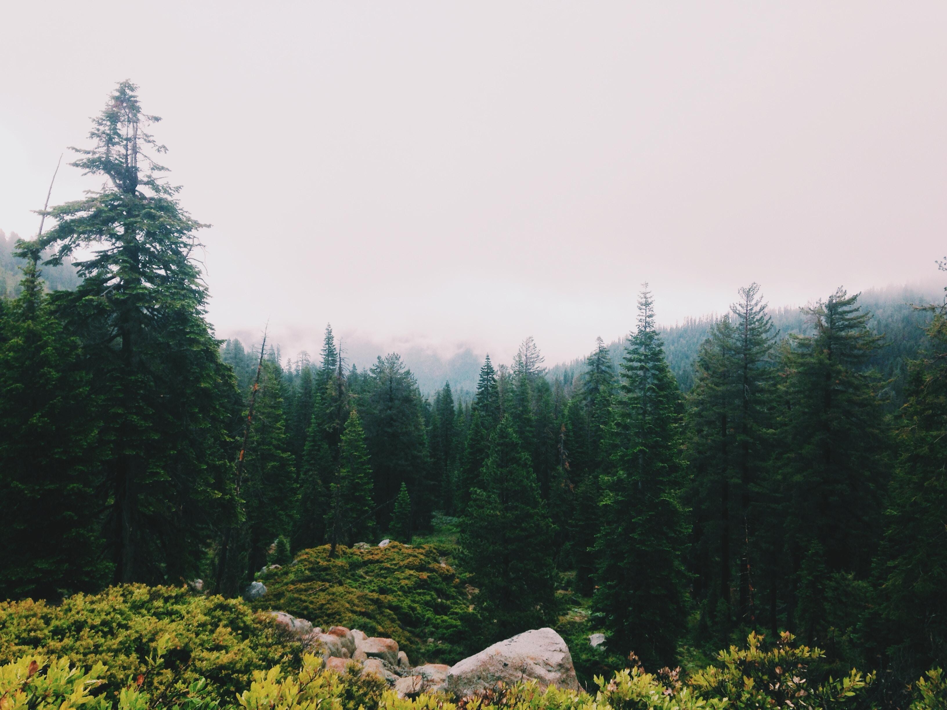 photo of pine trees near flowers