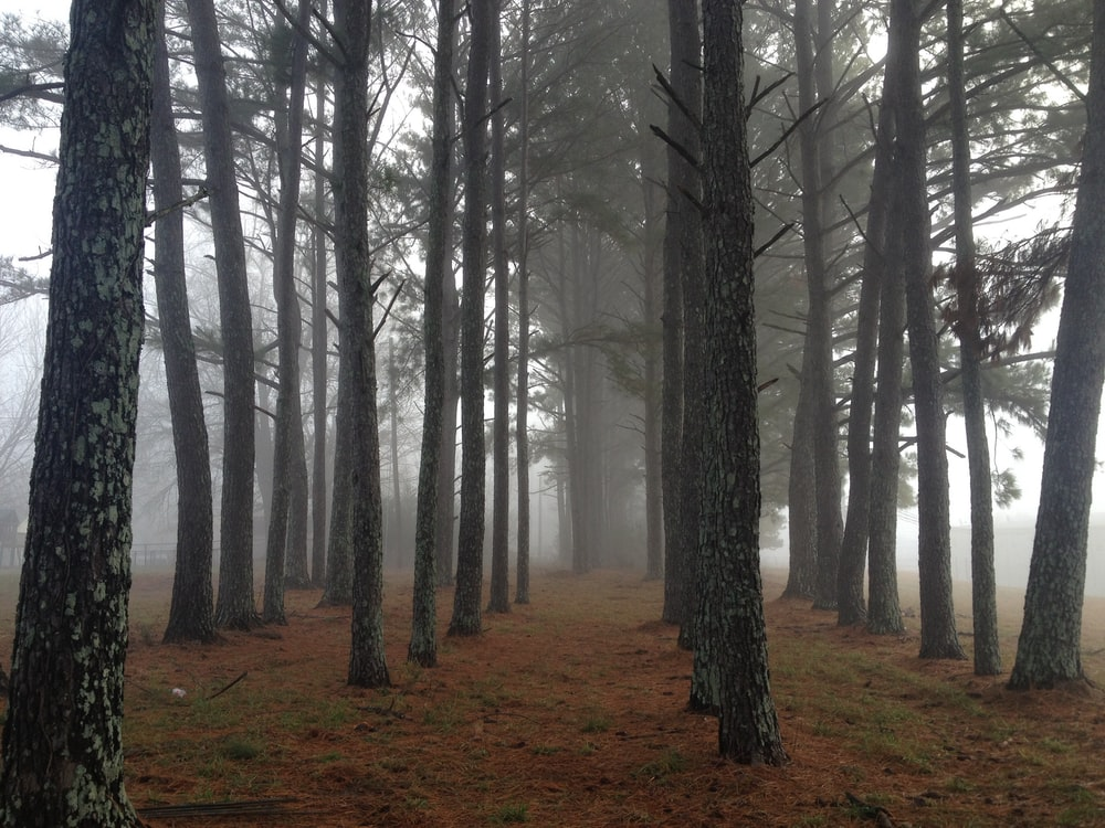brown trees covered in white fog