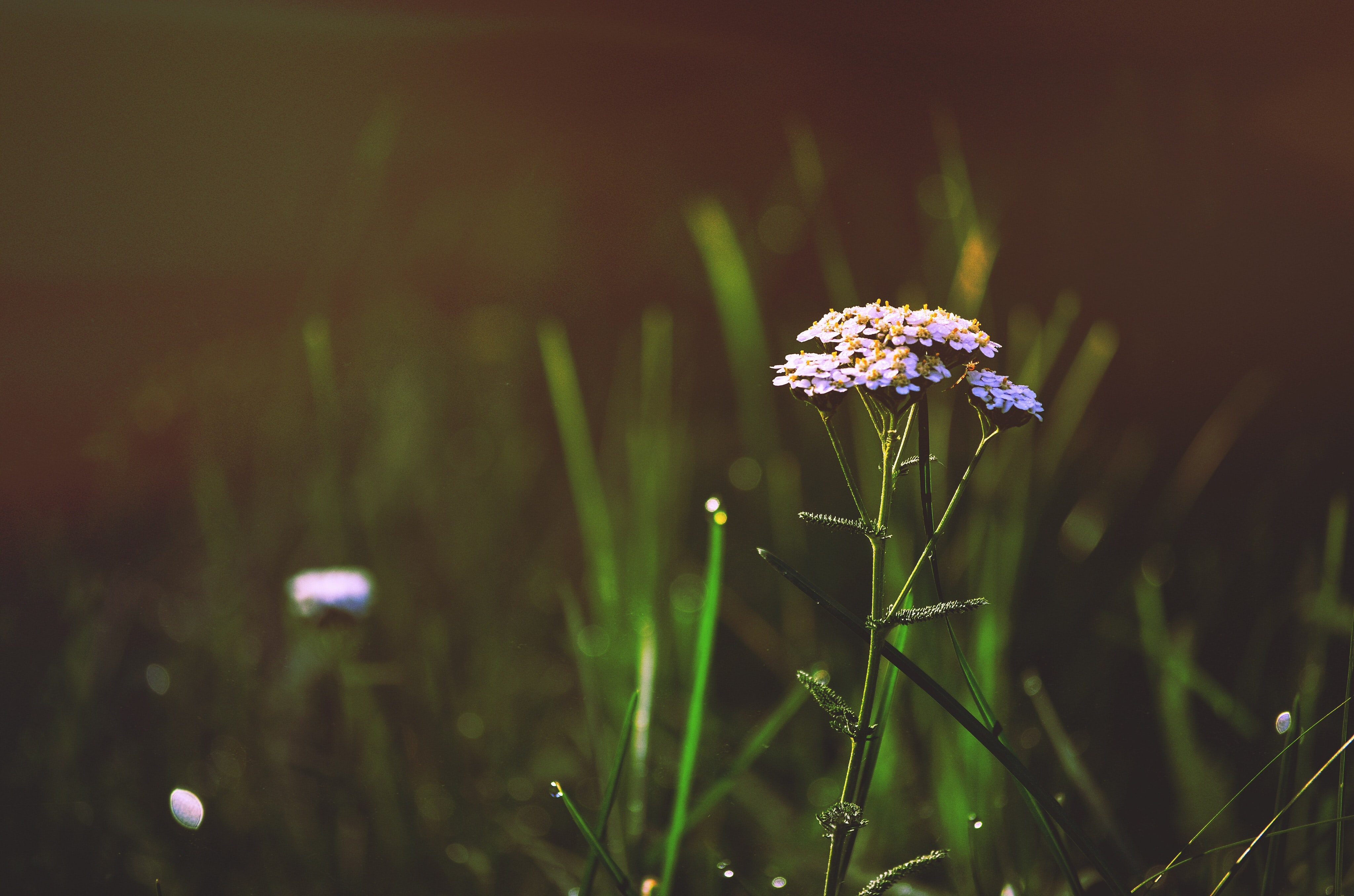 selective photography of purple and grey petaled flower surround green grass