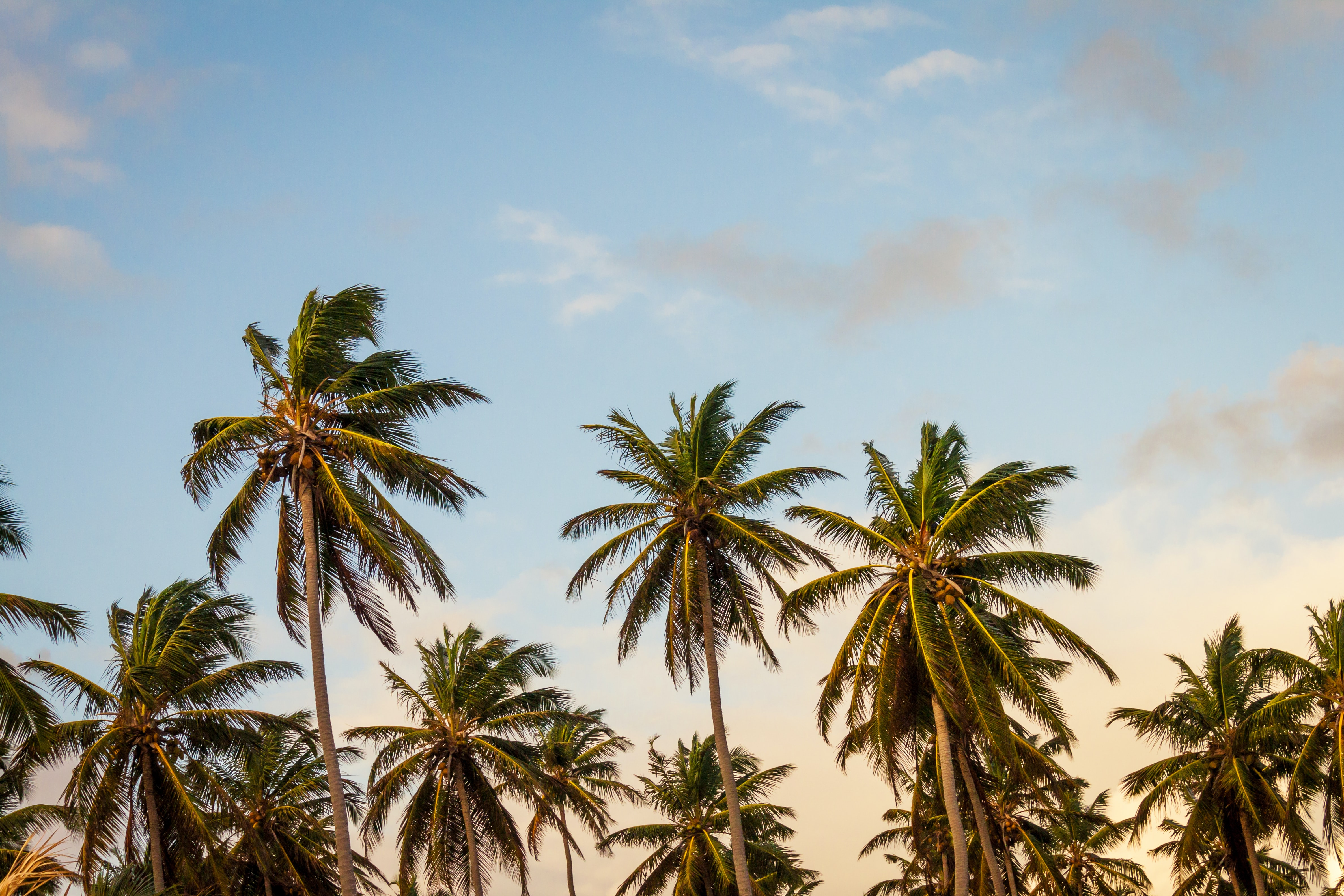 A bright windy palm tree paradise on an exciting summer day