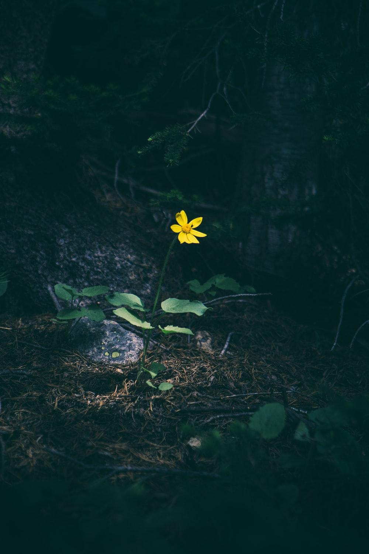 Permalink to Single Flower Wallpaper