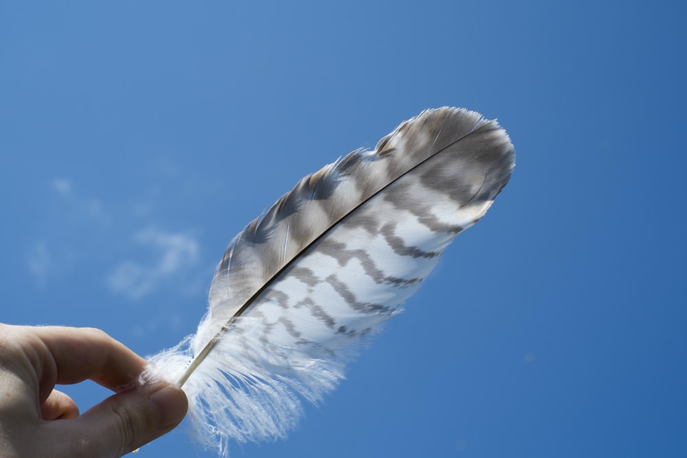 person holding a feather under blue sky