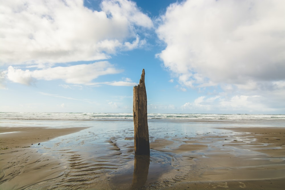 driftwood standing on body of water