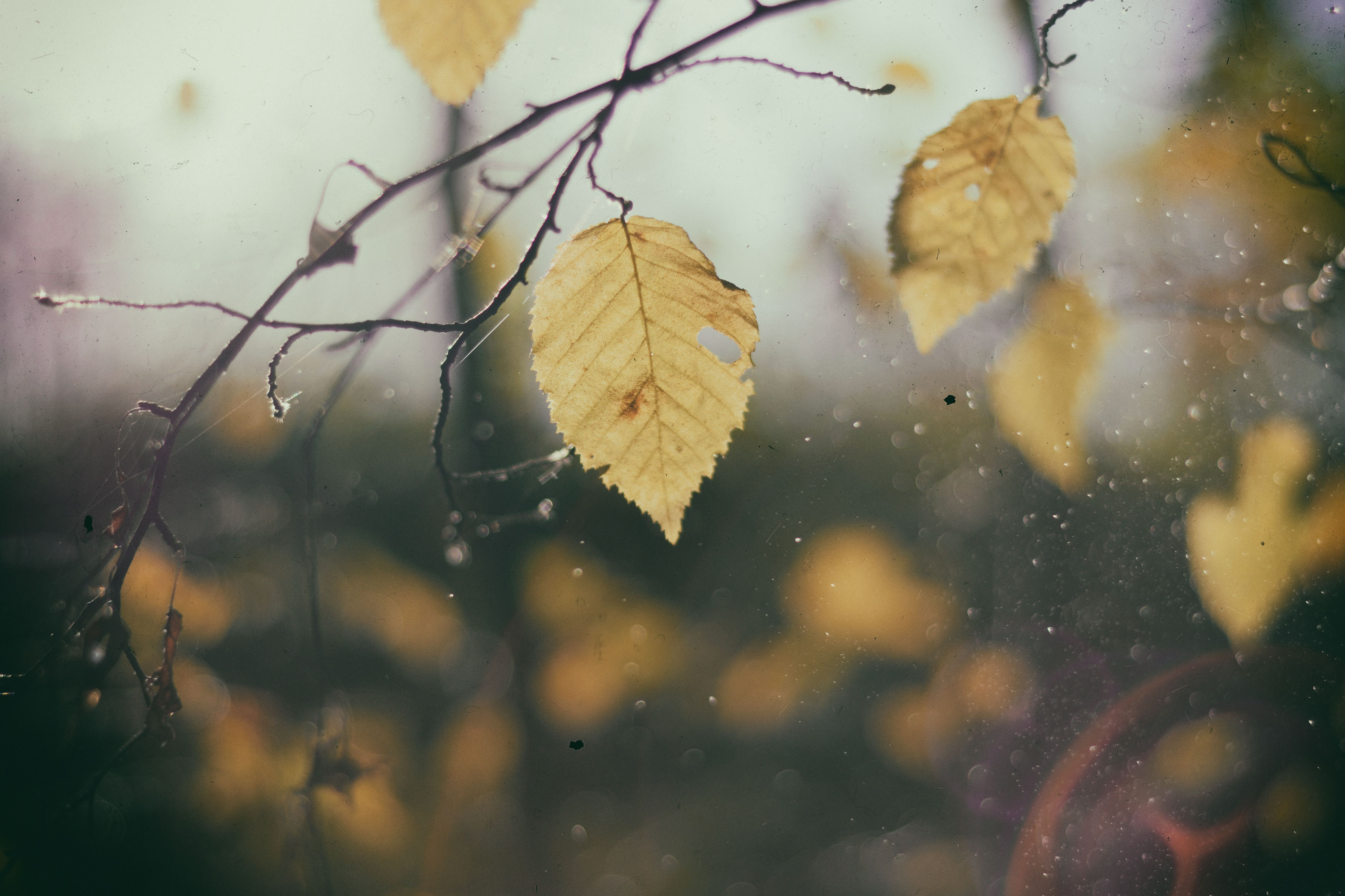 A gloomy shot of yellow autumn leaves on cobweb-covered branches