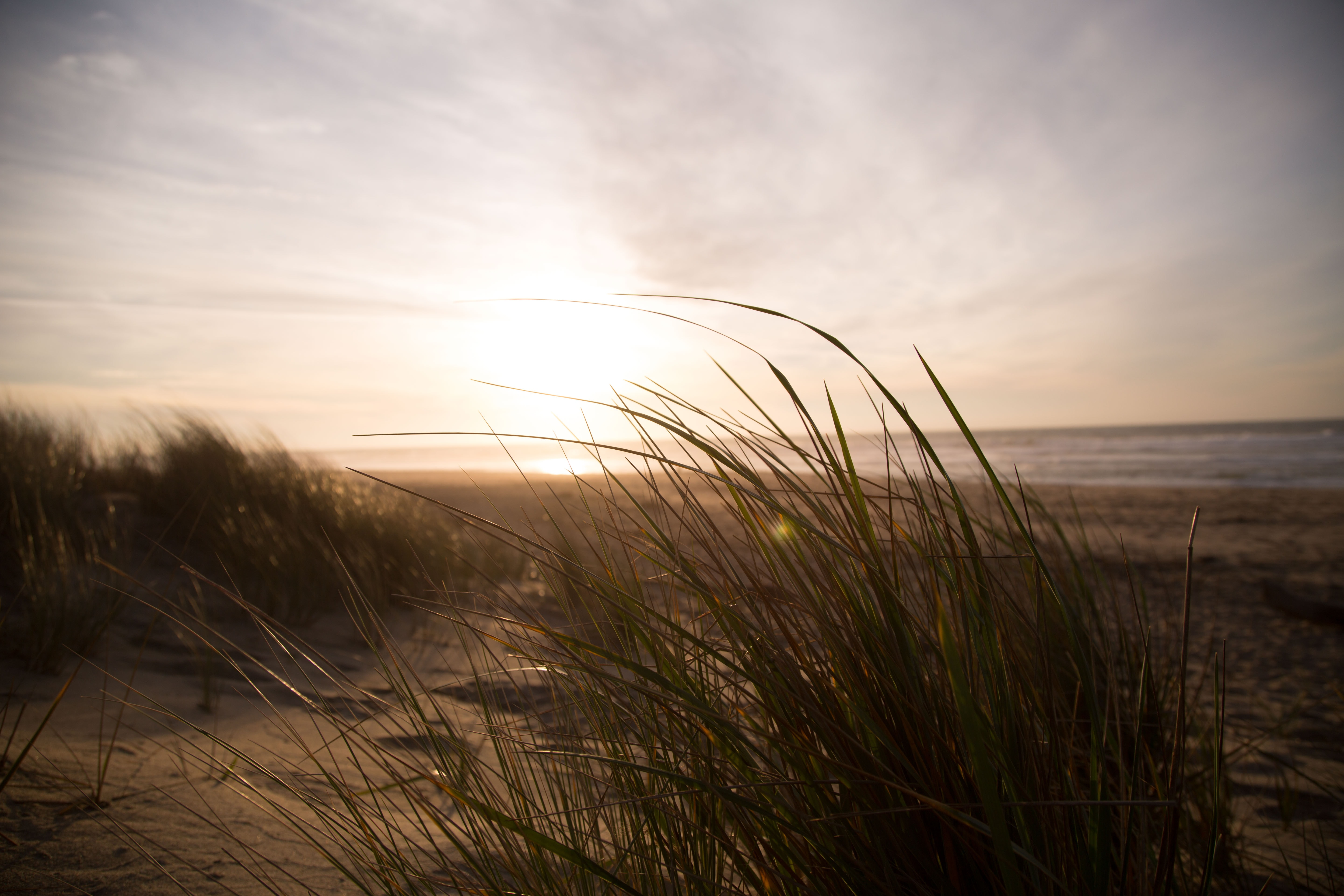 A tuft of windswept grass at the back of a sandy beach during sunrise