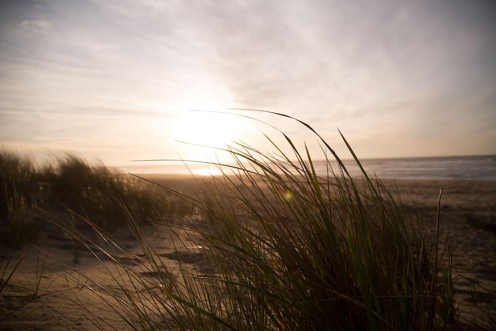 grass near seashore at daytime