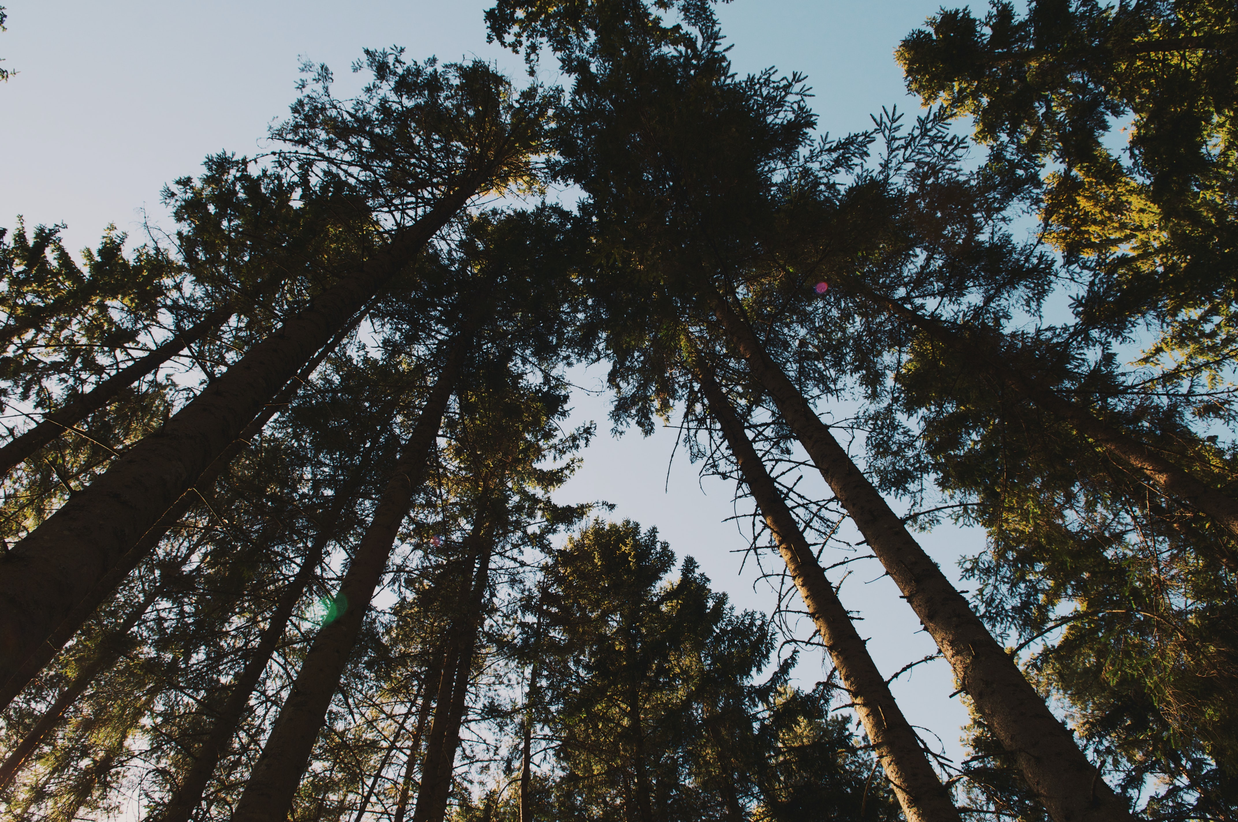 low angle photo of forest trees under blue sky