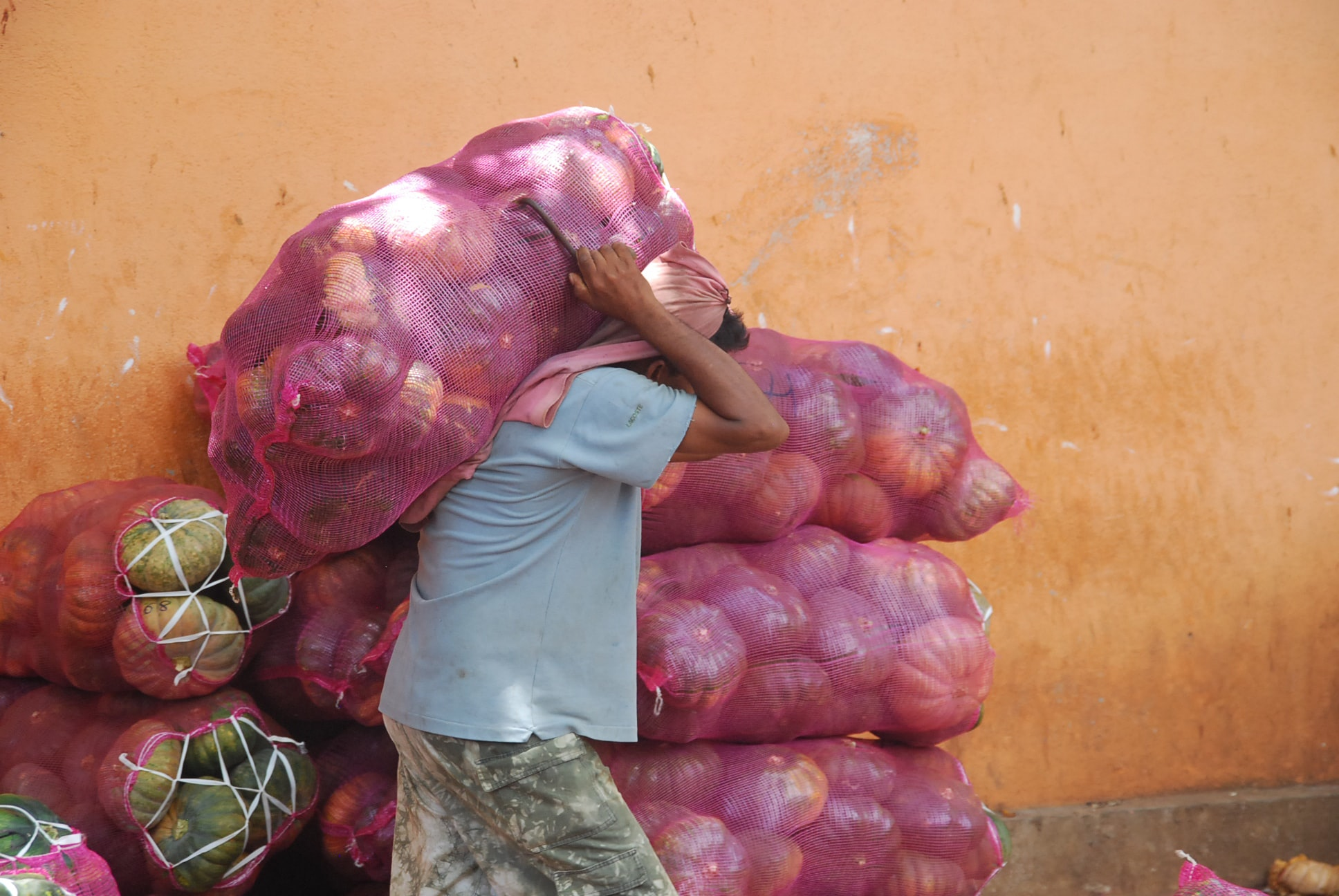 A man carries and stacks pumpkins in bags