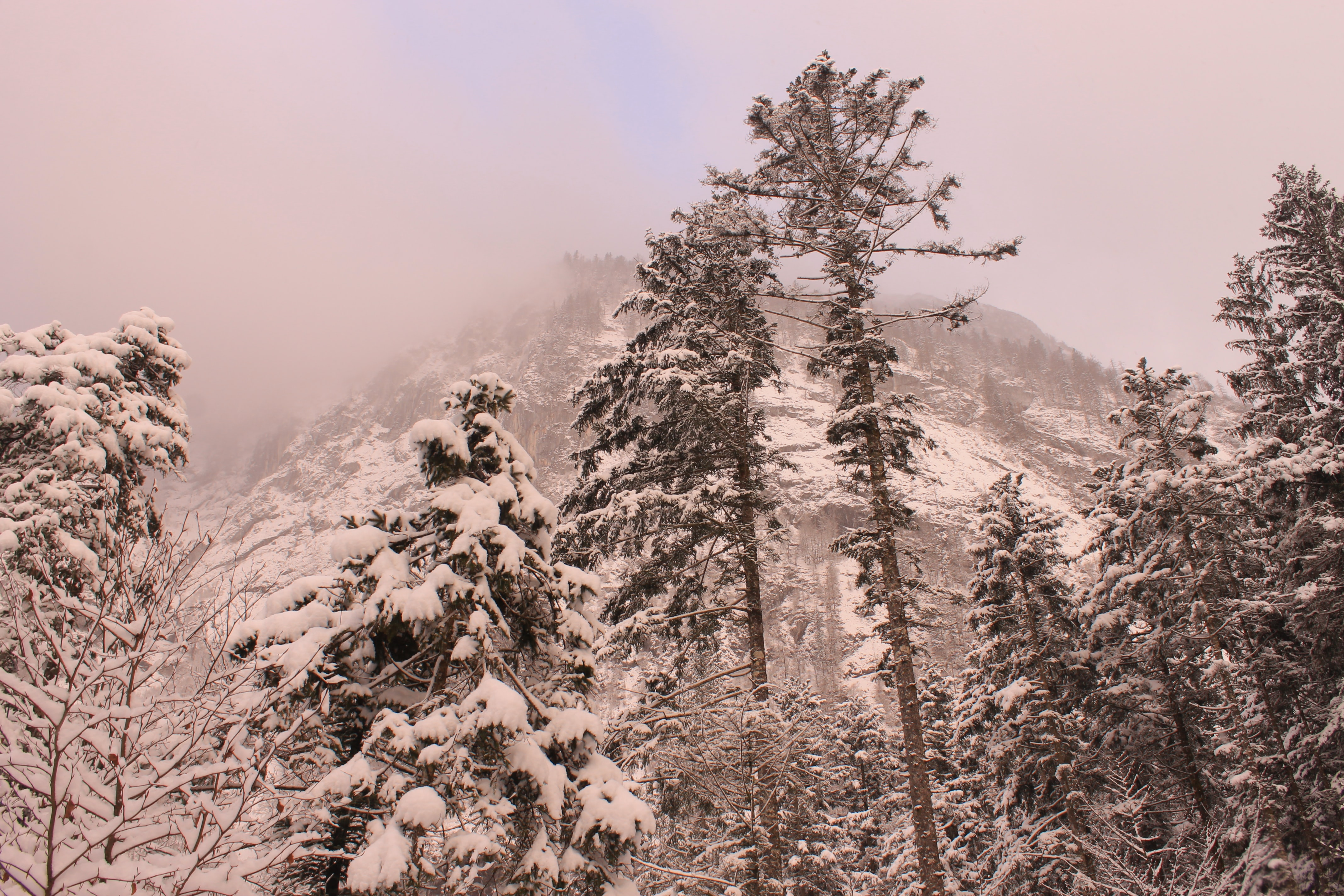 A low-angle shot of tall trees below a towering mist-shrouded mountain peak