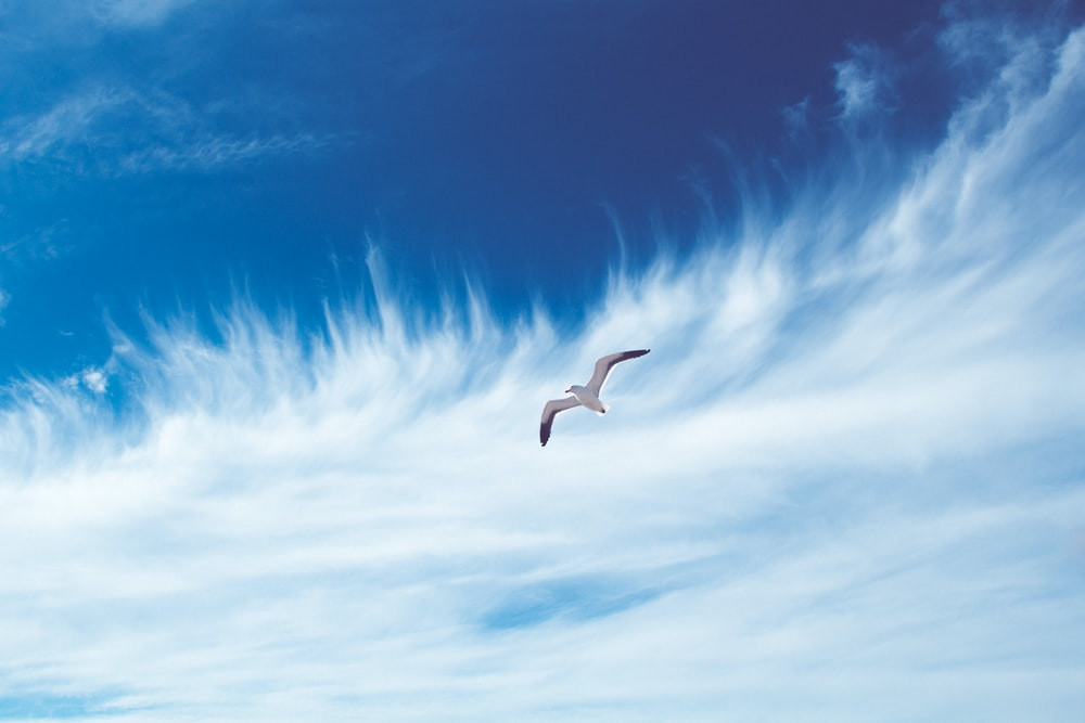bird flying on sky