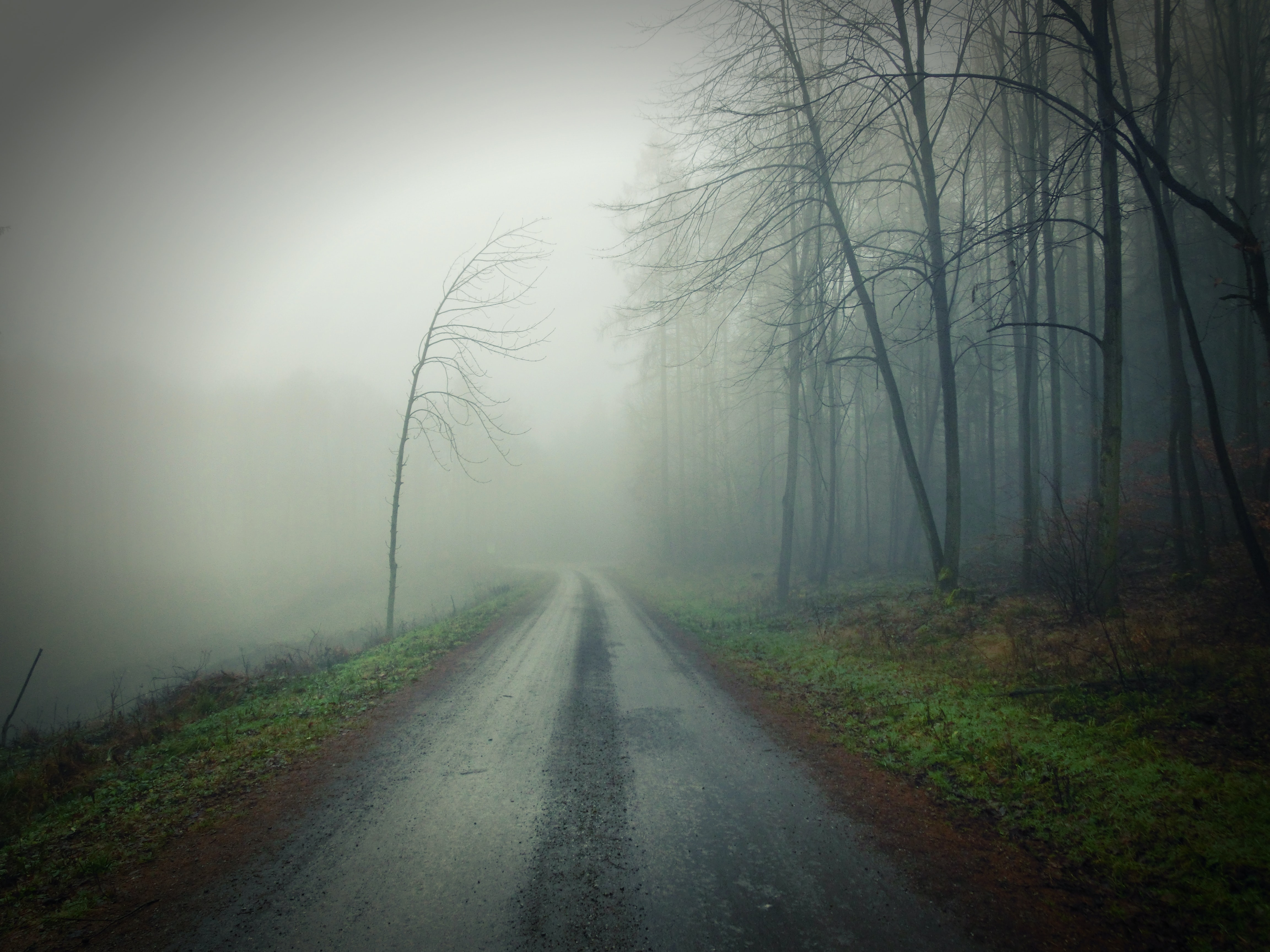 A moody road in a foggy, damp forest